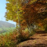 Der herbstliche Wanderweg mit Blick auf den Wannenberg