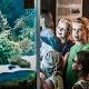 Aquarium im HöhlenSchauLand - Stadt Giengen