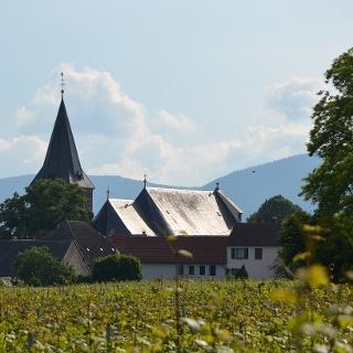 Ausblick auf Kirrweiler