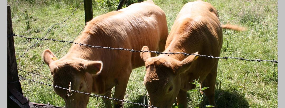 Vorschaubild Ackerland und Viehzucht