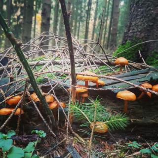 Herbst im Teuto