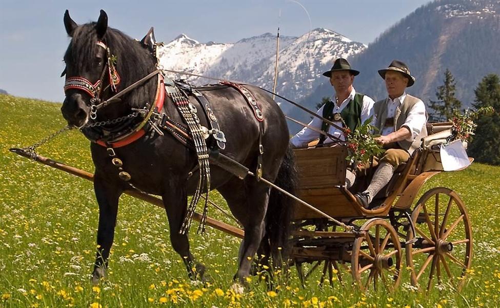 Pferdekutsche Sommer