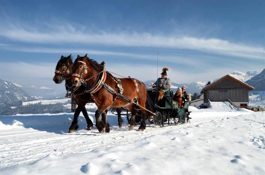 Pferdekutsche Winter