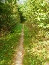 Waldtrail nach Lauterburg