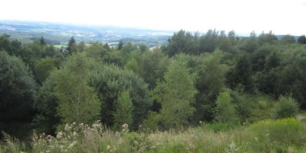 und zum Teutoburger Wald