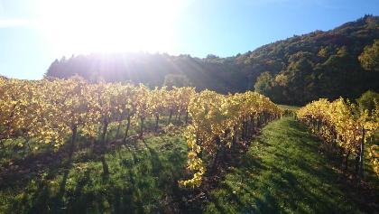 Weinberge und Pfälzerwald im Herbst