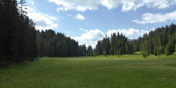Hochmoor Wildried