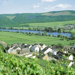 Wunderschöner Ausblick auf das Moseltal bei Longen & Riol