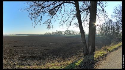 Landschaft im Himmelgeister Rheinbogen zwischen Himmelgeist und Rhein