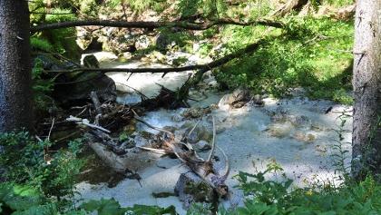 Der Seeaugraben zeichnet sich durch Urigkeit aus