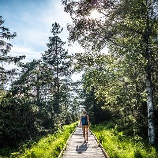 Bohlenweg durchs Wildseemoor