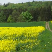 Rosenbuschweg