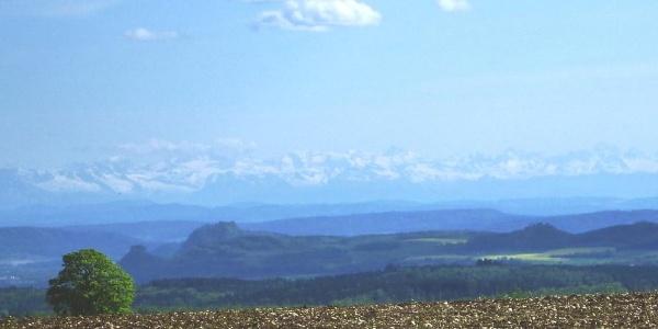 Blick in den Hegau mit Alpenpanorama