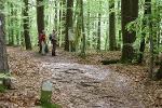 Tafeln informieren über das Naturschutzgebiet ''Hirschauer Berg''