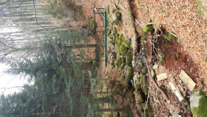 Schöner Waldpfad (Aufstieg)