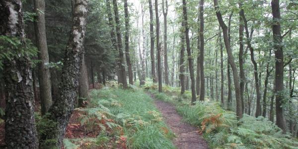 schöner Trail im Roetgener Wald