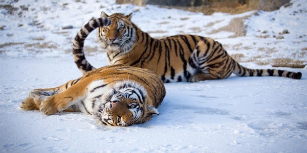 Tier-Erlebnispark Bell 3