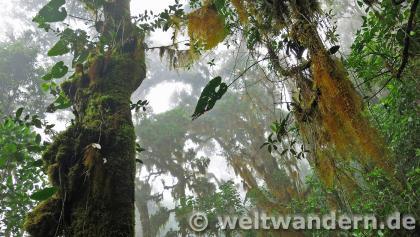 Der Aufstieg zum Chirripó führt durch mystischen Bergnebelwald.
