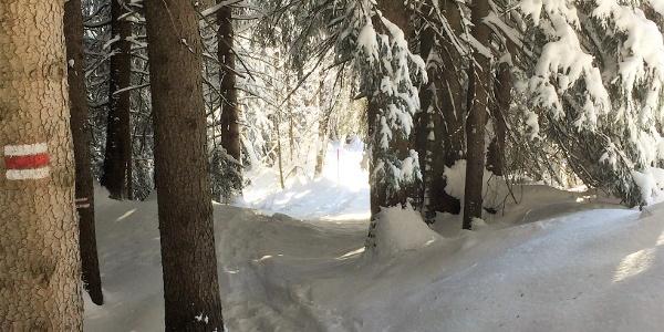 Schneeschuhroute