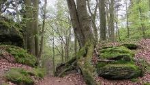 Vom Oderwald zu den Bodensteiner Klippen