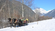 Horse carriage or sledge tour Rasun di Sopra