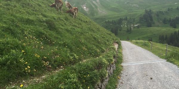 Klewenalp: Zuerst über wunderbare Naturstrassen