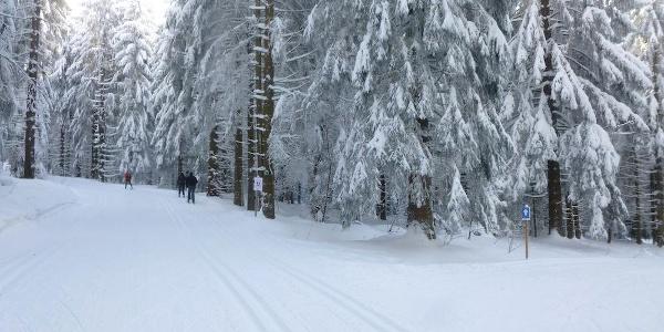 Abzweigung der Hochwald-Loipe rechts - zum Hirschenstein geradeaus