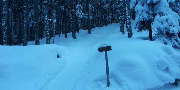 Im Wald immer wieder Hinweistafeln auf die Skiroute.