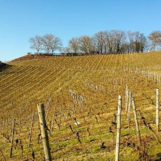 Weinber Hülle