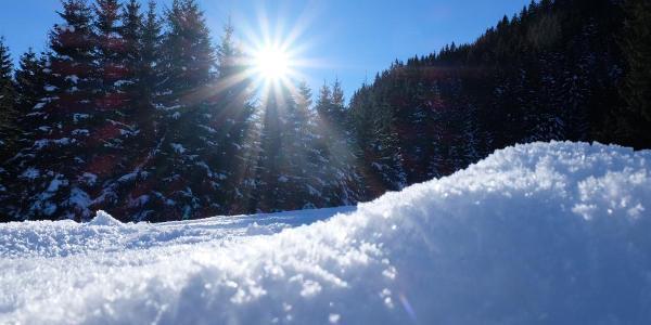 An der Alpe Stubental