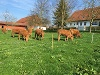 Milchkühe auf dem Uhlbachhof  - @ Autor: Beate Philipp  - © Quelle: Uhlbachhof