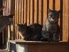 Die Katzen genießen ein Sonnenbad  - @ Autor: Beate Philipp  - © Quelle: Uhlbachhof