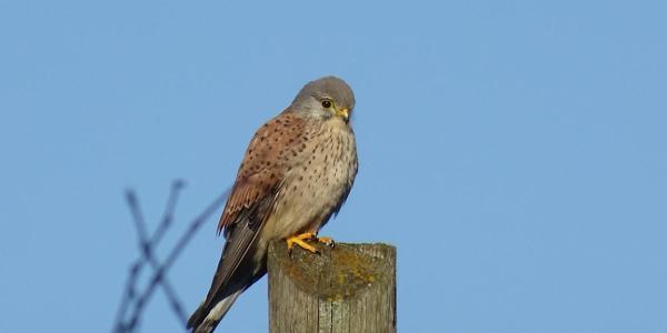 Falke beäugt die Wandergruppe