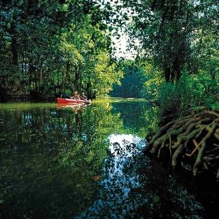 Die urwüchsige Landschaft der Peene macht eine Kanutour zu einem besonderen Naturerlebnis