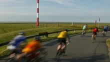 Rennradroute 3 - Die große Cuxlandtour