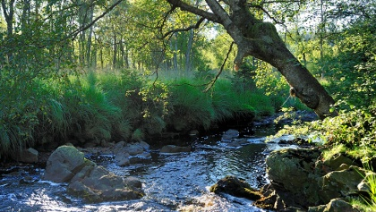 Vom Wald der Herzöge Ternell