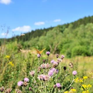 La vallée des papillons Schönberg
