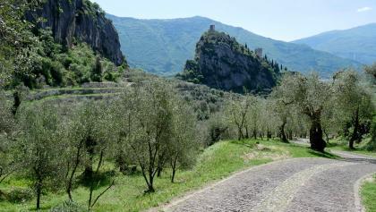Die Burg von Arco und die Olivaia (Olivenhain)