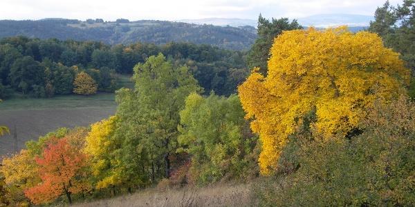 Herbst am Fröbelweg