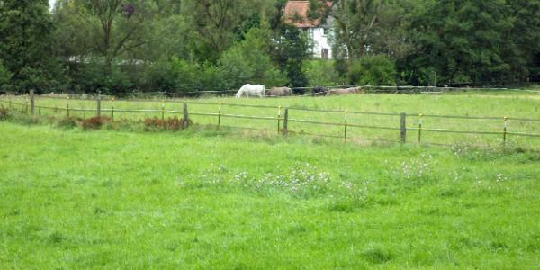 Pferde am A11 auf der Weide.