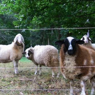 Zu Beginn der Tour grüßen Schafe