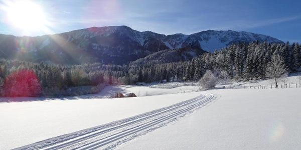 Panoramaloipe Puchberg
