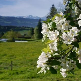 Scheidegg im Frühjahr