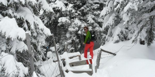 Höhenwanderung Am Gaberl