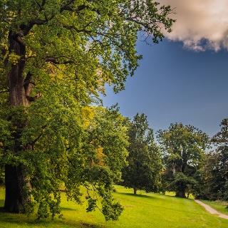 Der alte Baumbestand im Park zu Putbus ist bemerkenswert
