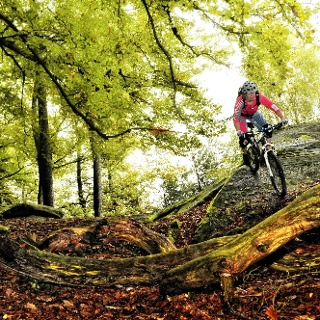 Mountainbiketouren in der Pfalz