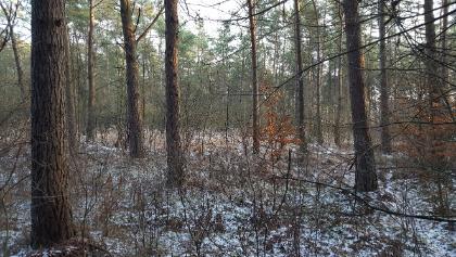 Ein Blick in den frostigen Wald