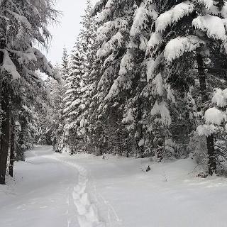 Schneeschuhwandern auf der Packeralpe