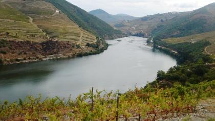 Weinberg am Douro