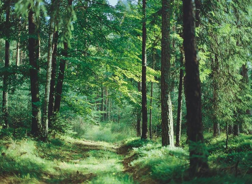 [r]auszeit Rad-Erlebnis: Tour Waldesruh